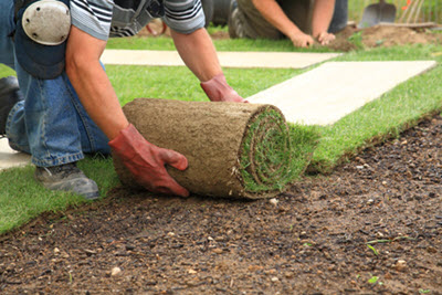 sod installation near me
