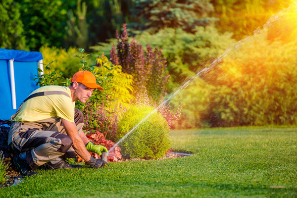 Lawn Pest Control Is Critical For a Healthy Lawn In Pembroke Pines