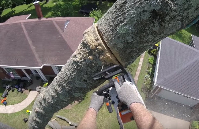 Tree removal in Pembroke Pines being completed by arborist at EPS Landscaping & Tree Service LLC